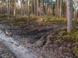 Matschwüste an der Kreuzung des Forstweg und der Rückegasse