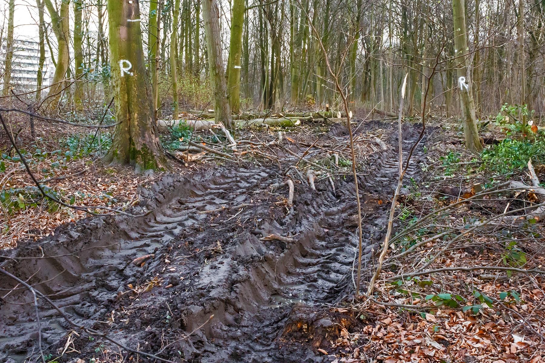 """Bodenzerstörung nach """"strengen Waldpflegestandards"""""""