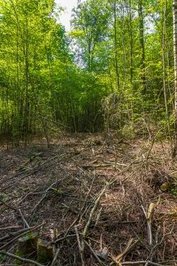 Rückegasse im Försterwald
