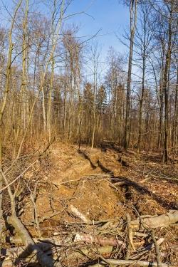 Rückegasse mit halbmetertiefen Bodengleisen