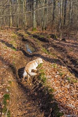 schwere Bodenschäden durch Grundbruch