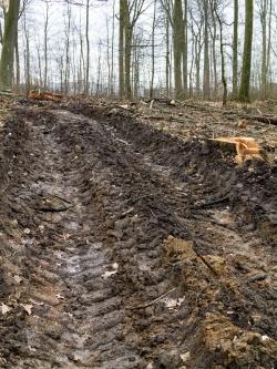Rückegasse mit tief verwundetem Waldboden