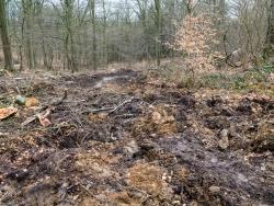 Verwüsteter Waldboden wie nach einem Panzerangriff