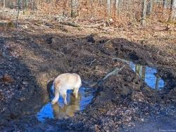 Verlust der Bodenfunktionen durch Bodenschäden
