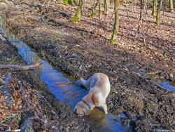 Verletzung des Nachhaltigkeitsprinzips durch Bodenschäden