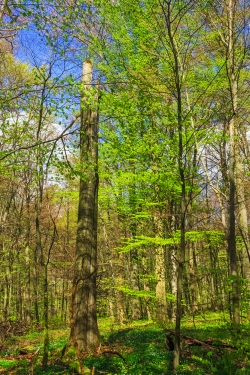 starkes stehendes Totholz