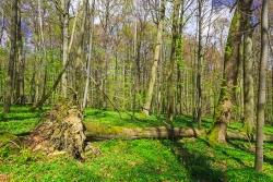schon 16 Vfm Totholz mehr als im benachbarten Wirtschaftswald