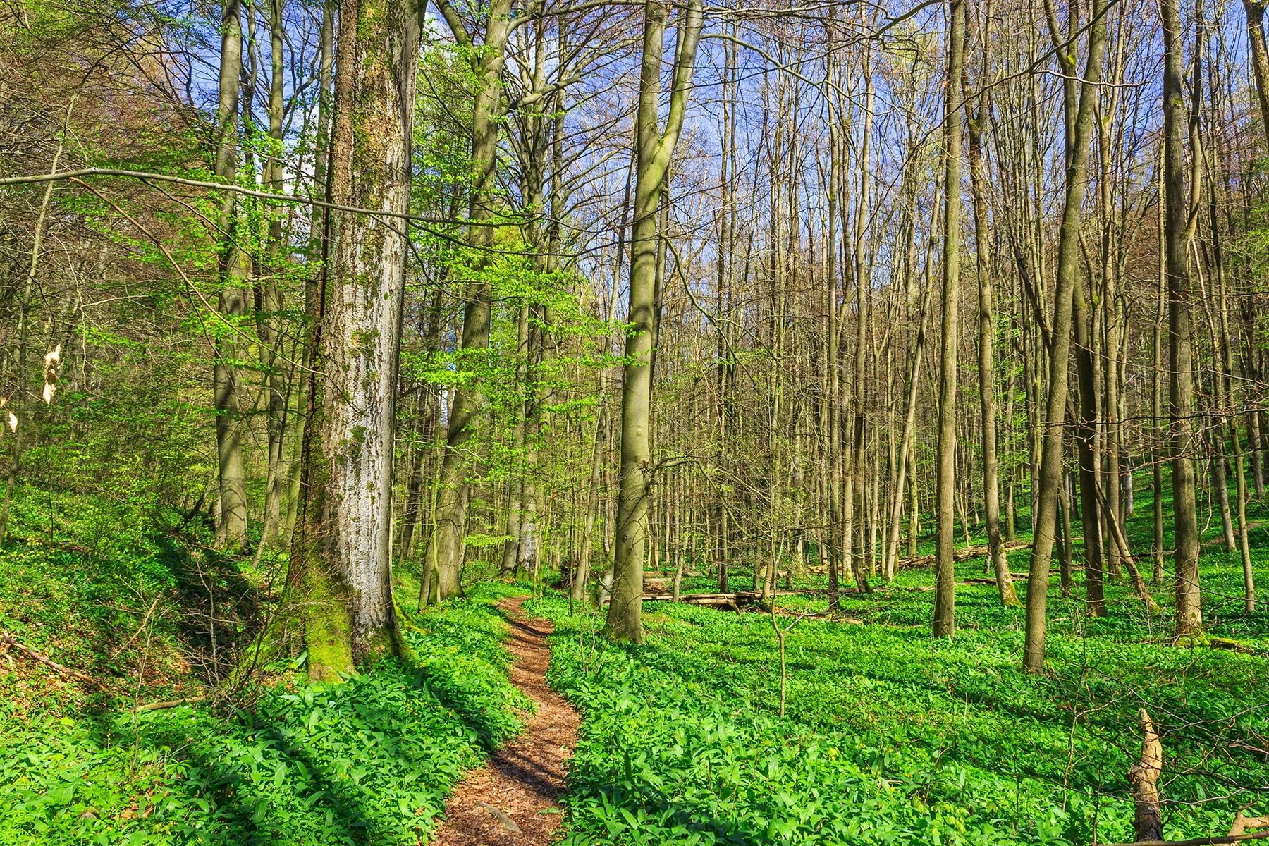 Wanderweg durch das Brunstal