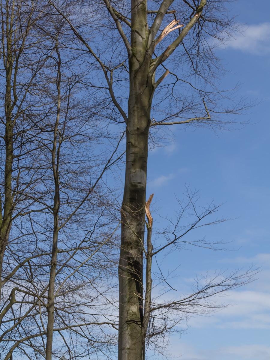 Abgebrochene Äste durch Baumfällungen