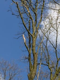 2 dicke abgebrochene Äste durch Baumfällungen
