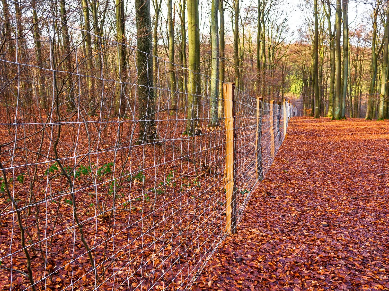 Wildschutzzaun in der Naturwaldzelle Schäferheld
