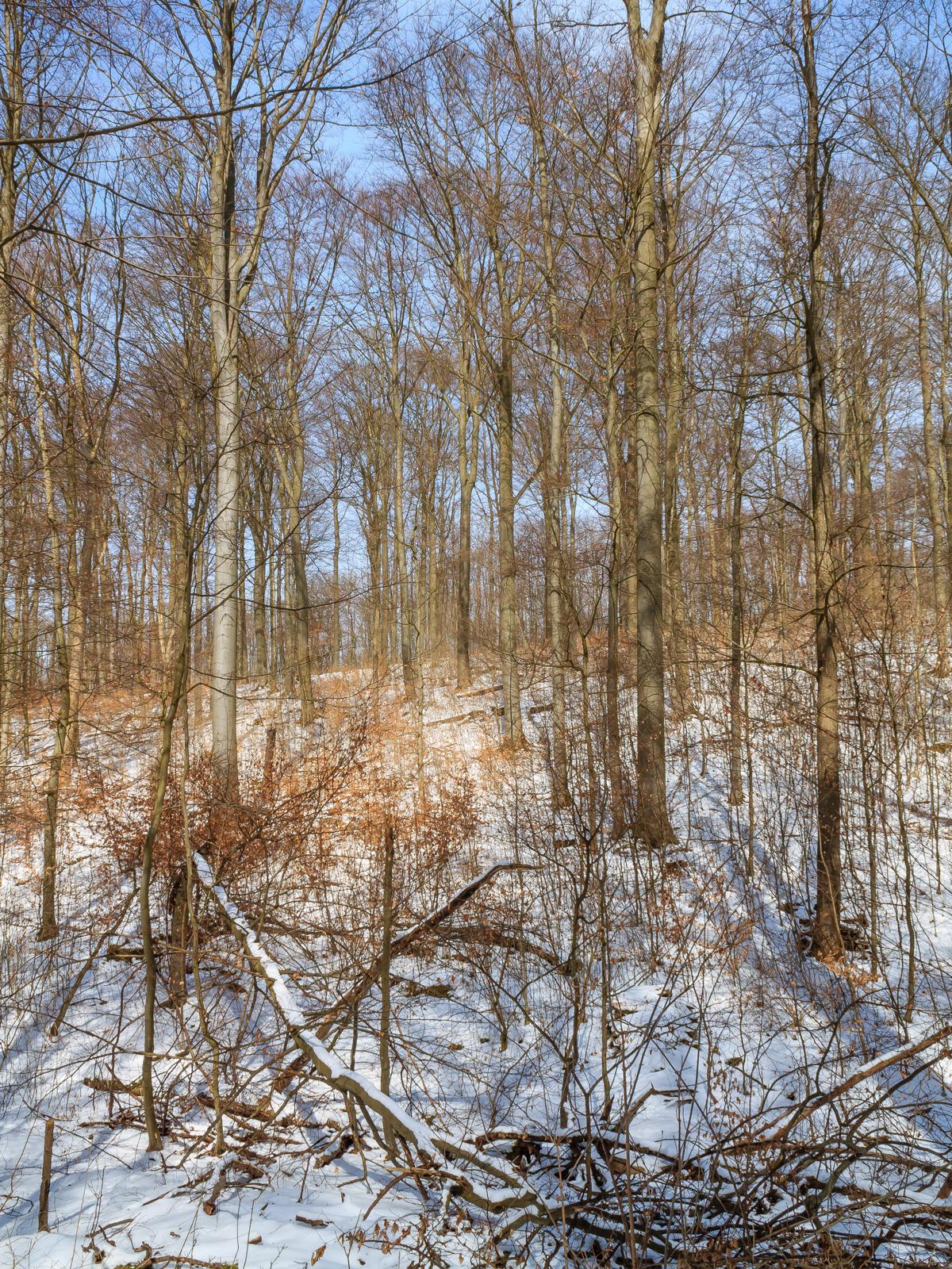 liegender Biotopbaum am Schaperberg