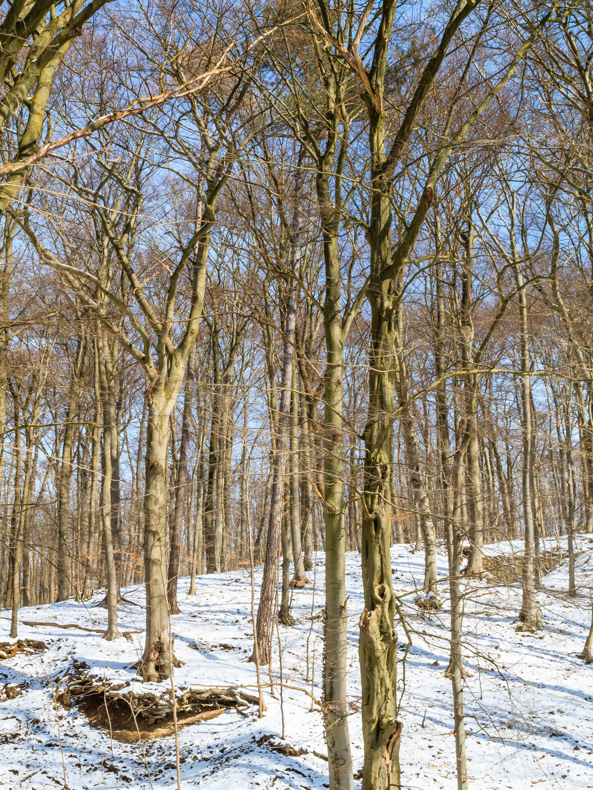 Winter am Schaperberg