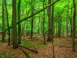 Totholzreichtum im Eichen-Hainbuchenwald