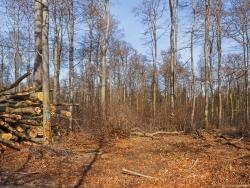 Holzplantage mit Unter- und Oberbestand