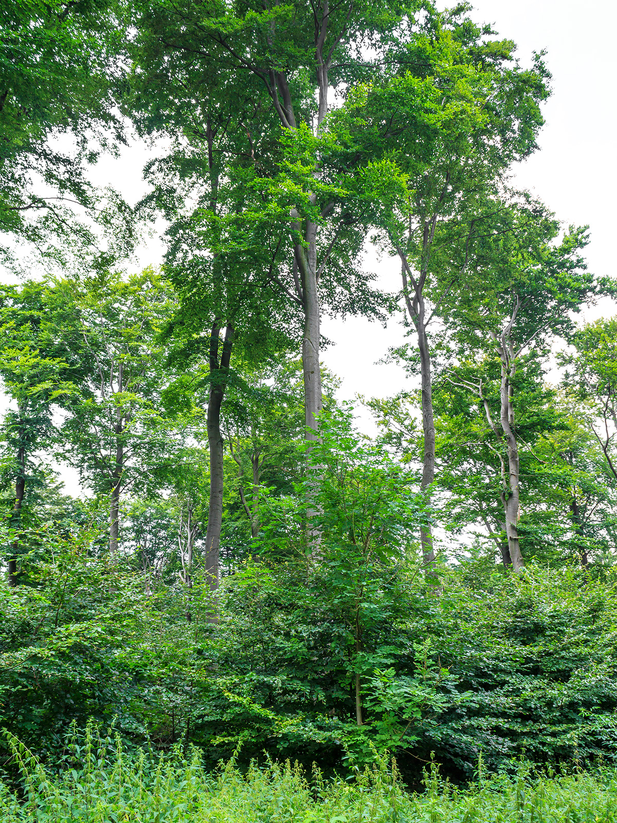 ein Wald wie gerupft