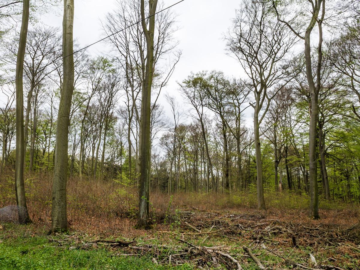 kein schöner Wald