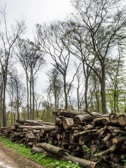 Meterhohe Stapel mit vergammelndem Buchenholz