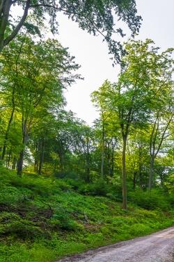 typischer Schirmschlag im Schellenberger Wald