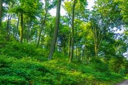 Schellenberger Wald - Starke Durchforstungen im Stadtpark