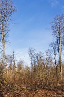 Endstation Buchenstangenholz