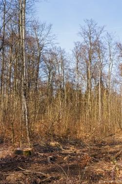 abstoßend häßlicher Försterwald