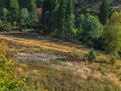 """Motto des Nationalparks: Natur Natur sein lassen"""