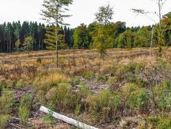"""""""Umwandlung in naturnahe Auenwälder"""""""