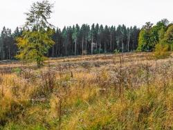 """naturnaher Waldlebensraum"""