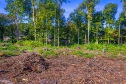 abgeholzter Wald, Blick nach Westen zur Randebrockstraße