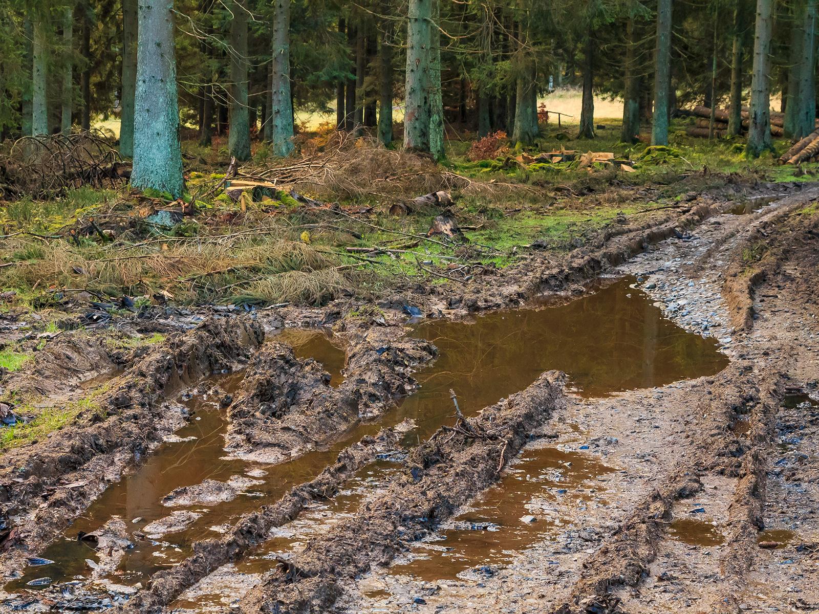 tiefe Bodengleise neben dem Forstweg