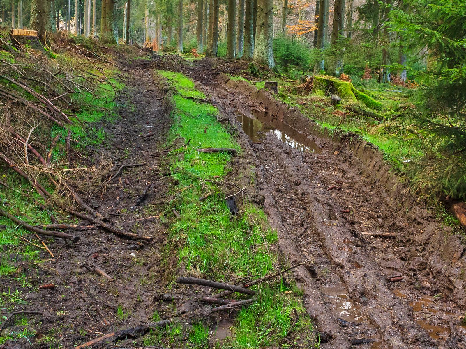 40 cm tiefe Bodengleise, in denen sich das Wasser staut