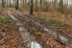 Rückegasse B mit schwerem Bodenschaden (Grundbruch)