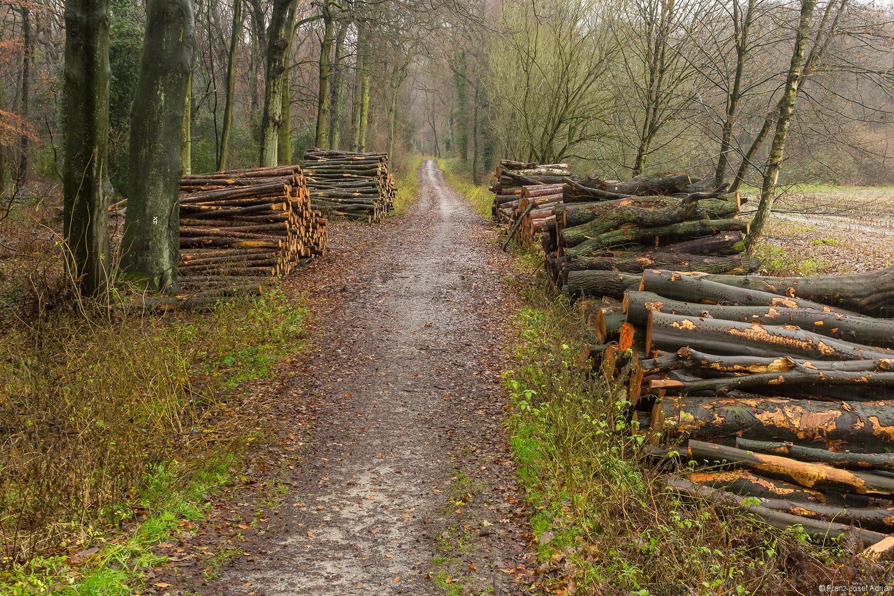 Gesamtansicht der Holzpolter am Schlehenkamp