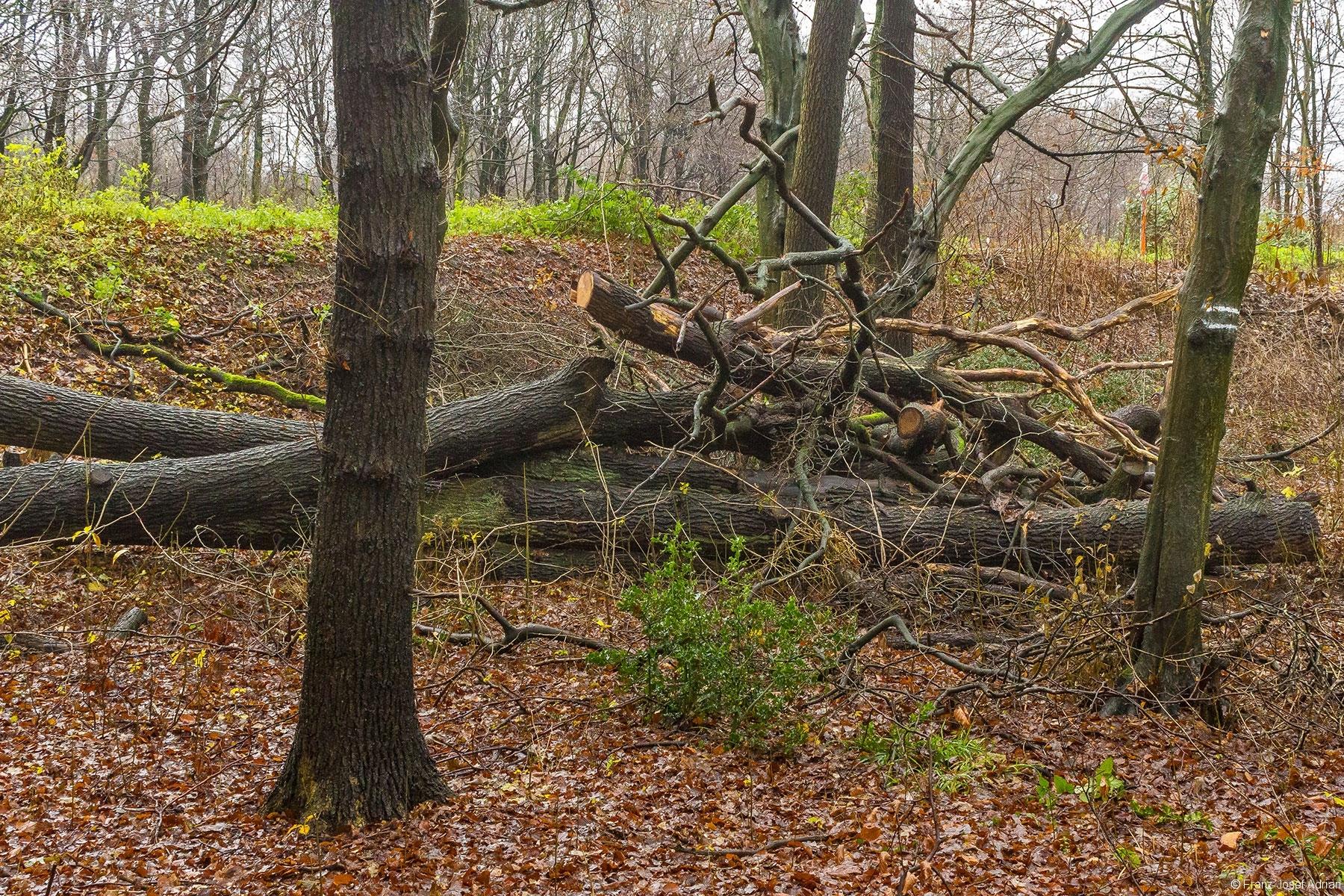 kurz und klein gesägter Habitatbaum