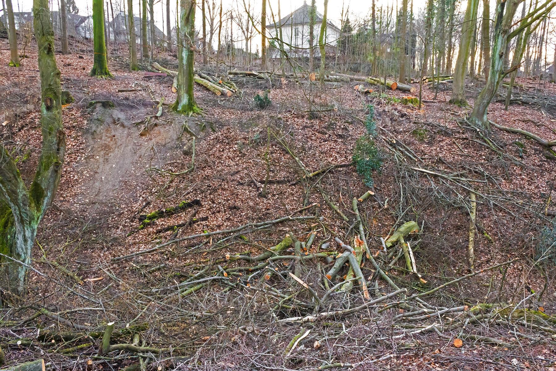Zerstörung des bachnahen Waldes