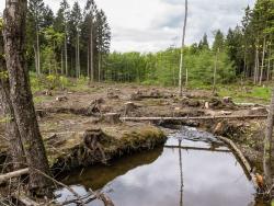 kahlgeschlagene Fläche mit Baumstümpfen und Astabfällen