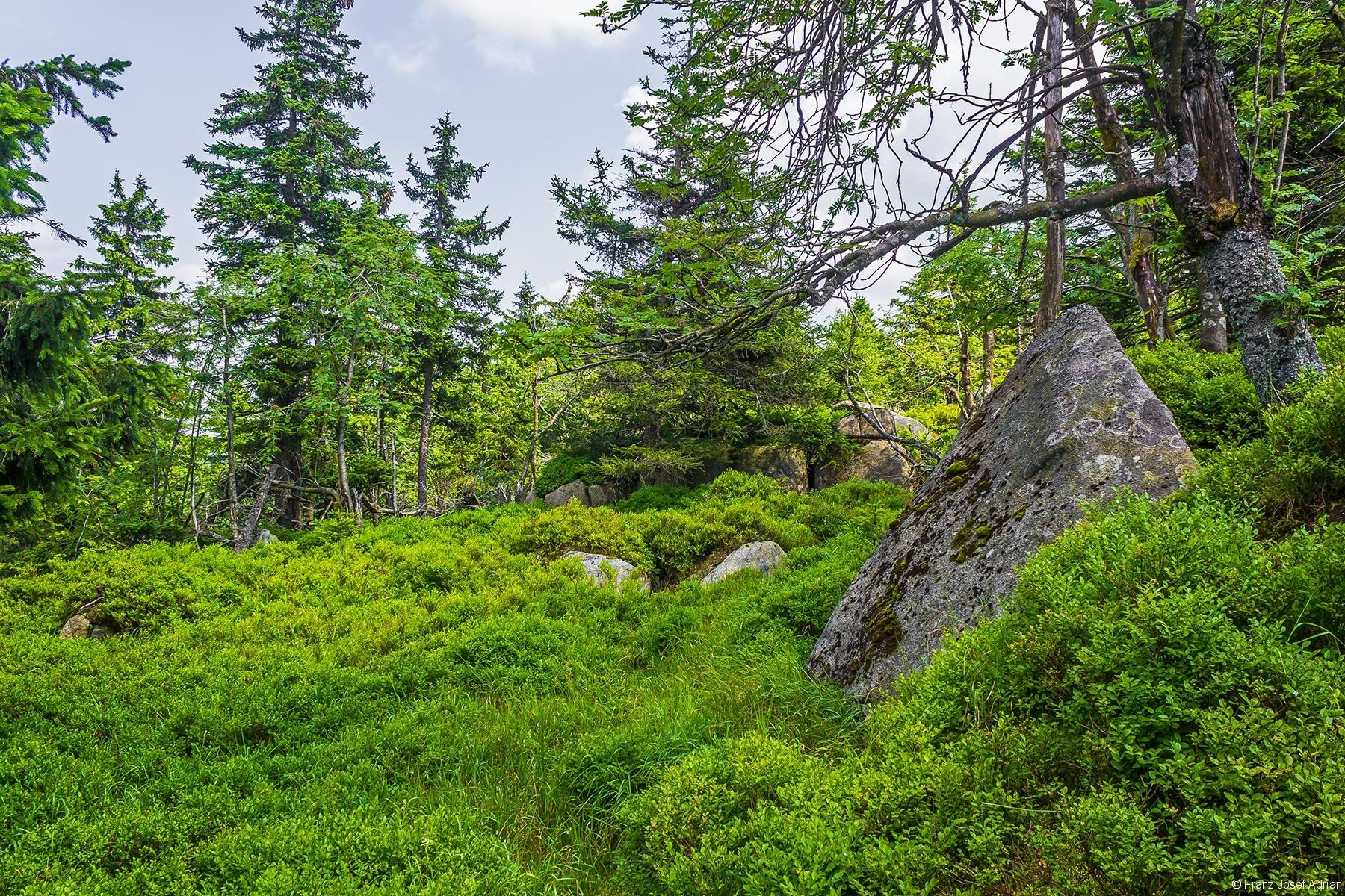 dicht mit Heidelbeersträuchern bewachsene Granitblöcke