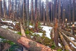 Chaos aus abgebrochene Fichtenstämmen im mittleren Bereich des Schneelochwegs