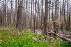 Forstruine mit Fingerhut, Draht-Schmiele und Woll-Reitgras