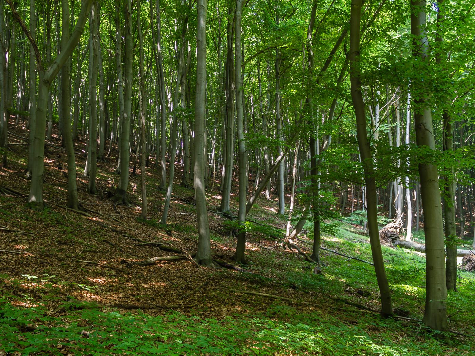 rechts im Bild liegender Totholzbaum