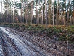 Erntemaschinen zerstören neben dem Forstweg den Waldboden