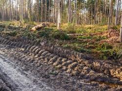 tiefe Fahrspuren im vermatschten Waldboden neben dem Forstweg