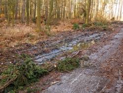Zerstörung des Waldbodens durch Holzlagerplatz neben dem Forstweg