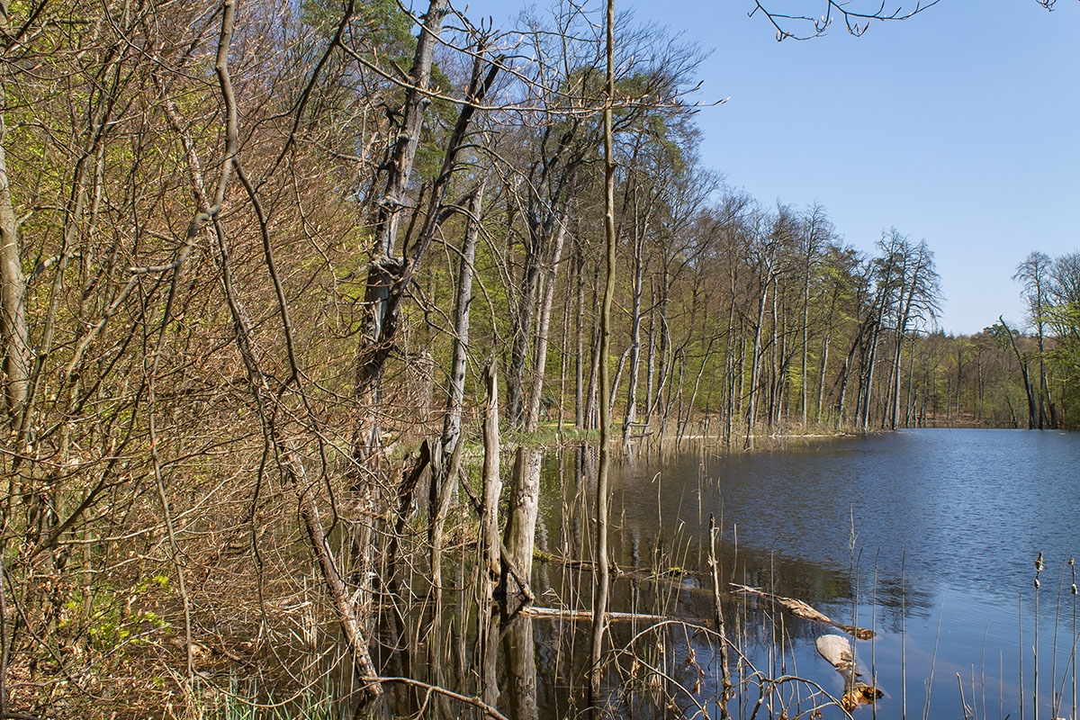Schweingartensee_2