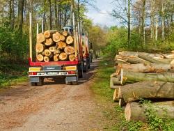 vollbeladener Holztransporter der Firma Siepmann mit Anhänger