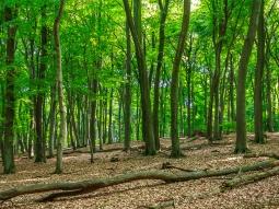 liegendes Totholz im Sommerwald