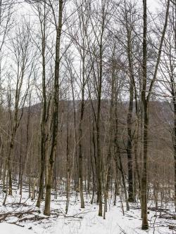 Stangenforst am Mittelberg