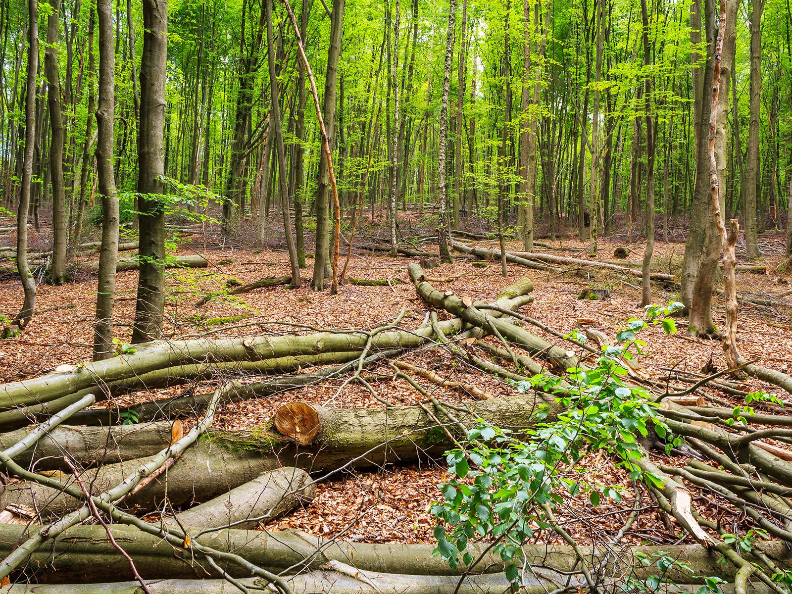 """""""Reserve-Z-Bäume dienen als Sicherheitsreserve"""""""
