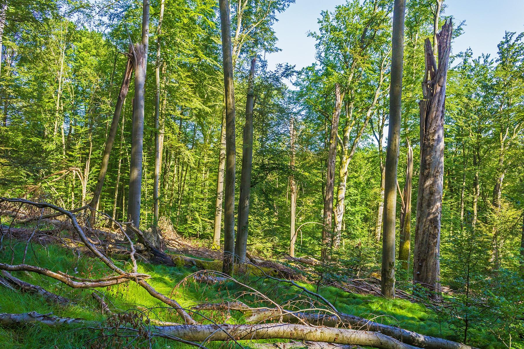 Naturwaldreservat Brunnstube